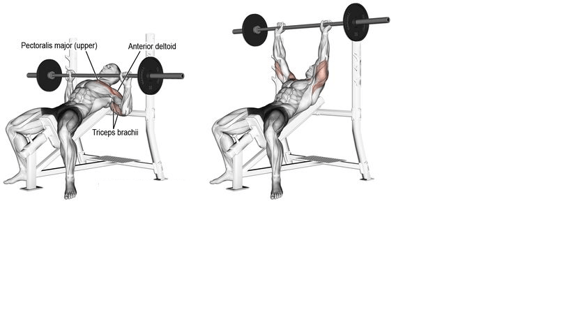 inclined bench press
