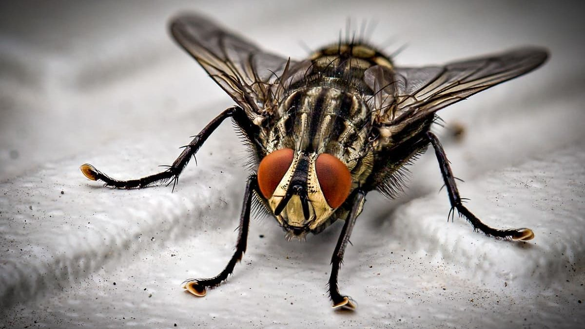 How Common Household Pests Can Negatively Impact your Health