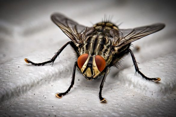 Household Pests Can Negatively Impact your Health