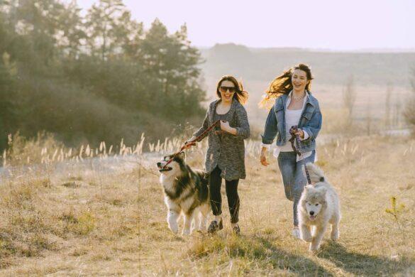 4 Health Benefits of Having a Pet