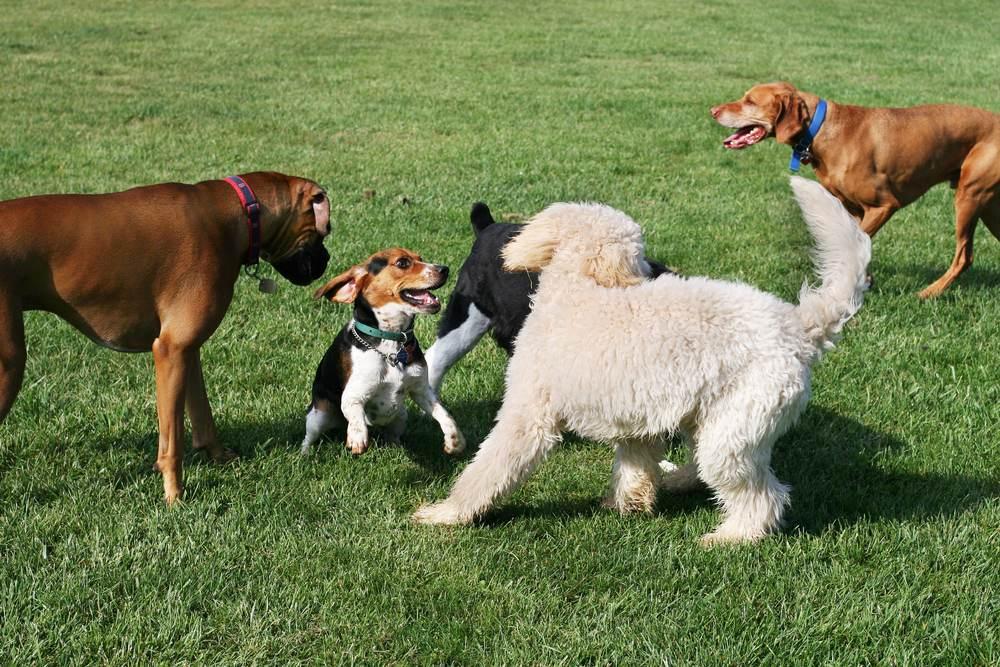 Take Fido to the dog park